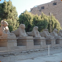 Avenue Of Sphinxes In Luxor Are Reborn